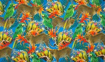 tricot papagaaien