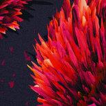 Buming Autumn by Thorsten Berger